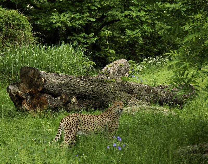 Geparden Anlage